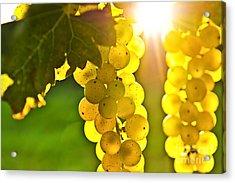Yellow Grapes Acrylic Print by Elena Elisseeva