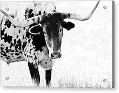 3255 Acrylic Print by Elizabeth Hart