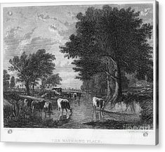 Cattle, 19th Century Acrylic Print by Granger