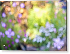 Flower Garden In Sunshine Acrylic Print by Elena Elisseeva