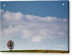Lonely Tree Acrylic Print by Mats Silvan
