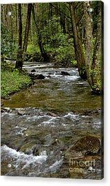Monongahela National Forest Acrylic Print by Thomas R Fletcher