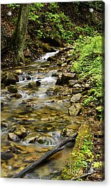 Rushing Mountain Stream Acrylic Print by Thomas R Fletcher