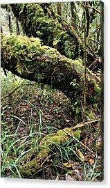El Yunque National Forest Acrylic Print by Thomas R Fletcher