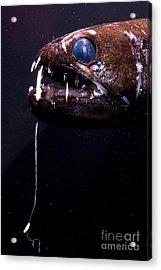 Dragonfish Acrylic Print by Dante Fenolio