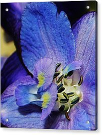 A Close Look Acrylic Print by Bruce Bley