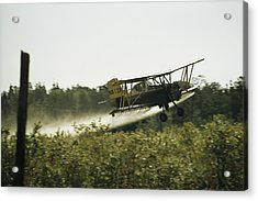 A Crop Dusting Airplane Flys Low Acrylic Print by Bill Curtsinger