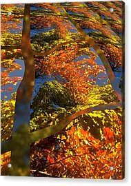 A Fall Perspective Of Color Acrylic Print by Rene Crystal