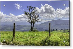 A Fence And A Tree 3552hdr Acrylic Print by Sortarivs Arts