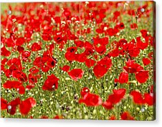A Field Of Poppies Acrylic Print by Richard Nowitz