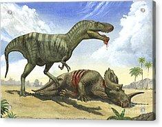 A Gorgosaurus Libratus Stands Acrylic Print by Sergey Krasovskiy