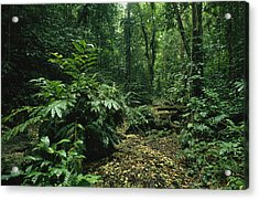 A Lush Woodland View In Papua New Acrylic Print by Klaus Nigge