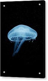 A Moon Jellyfish (aurelia Aurita) Berlin, Germany Acrylic Print by Andreas Schlegel