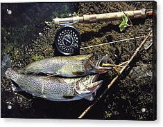 A Pair Of Cutthroat Trout, Salmo Acrylic Print by Bill Curtsinger
