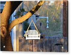 A Place To Perch Acrylic Print by Nikki Marie Smith
