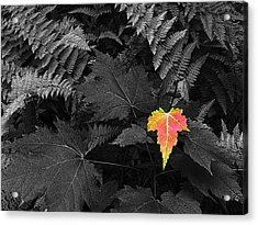 A Rare Thing Acrylic Print by William Fields