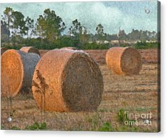 A Roll In The Hay Acrylic Print by Peggy Starks