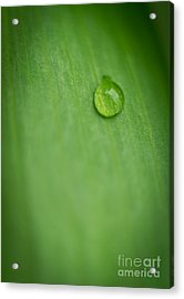 A Single Drop Acrylic Print by Melle Varoy