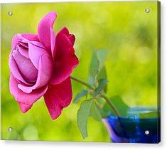 A Single Rose Acrylic Print by Heidi Smith