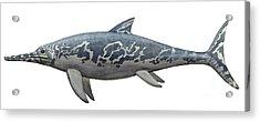 A Temnodontosaurus Burgundiae Acrylic Print by Sergey Krasovskiy
