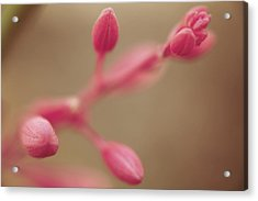 A Tentative Touch Acrylic Print by Laurie Search