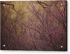 A View Of A Dew-covered Bush In Bloom Acrylic Print by Joel Sartore