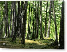A Walk In The Forest Acrylic Print by Mike Flynn