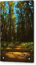 A Walk In The Pines Acrylic Print by Phil Koch