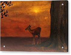 A Young Deer Acrylic Print by Tom York Images