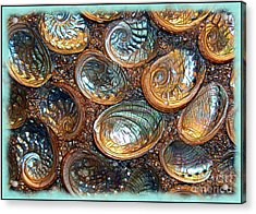 Abalones Acrylic Print by Judi Bagwell
