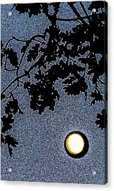 Abstract 229 Acrylic Print by Pamela Cooper