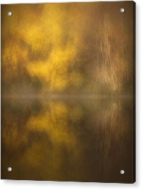 Abstract Birch Reflections Acrylic Print by Andy Astbury