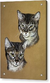 Abyssinian Cats Acrylic Print by Patricia Ivy