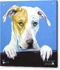 Ac Pup Acrylic Print by Pat Burns