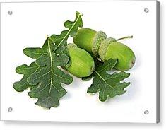 Acorns With Oak Leaves Acrylic Print by Elena Elisseeva