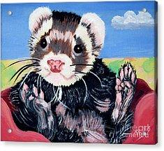 Adorable Ferret Acrylic Print by Phyllis Kaltenbach