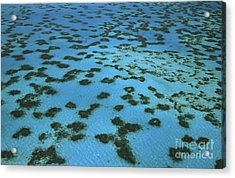 Aerial View Of Great Barrier Reef Acrylic Print by L Newman and A Flowers and Photo Researchers