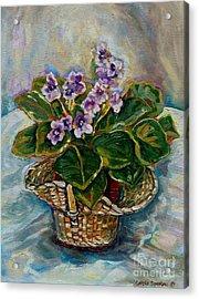 African Violets Acrylic Print by Carole Spandau