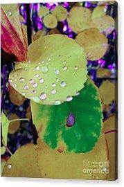 After Rain Acrylic Print by Michelle Bergersen