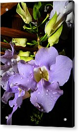 After The Rain Acrylic Print by Jose Rodriguez