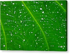 After The Rain Acrylic Print by Michael Krahl
