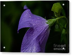 After The Rain Acrylic Print by Tim Grimmel