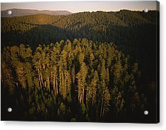 Afternoon Sunlight Bathes Redwood Trees Acrylic Print by James P. Blair
