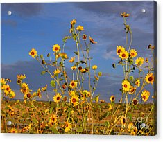Against The Blue Sky Acrylic Print by Tamera James