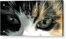Aged Eyes Acrylic Print by Rory Sagner