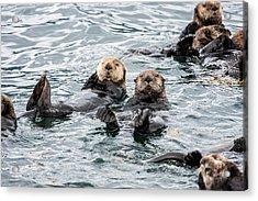 Alaskan Sea Otters Acrylic Print by Josh Whalen