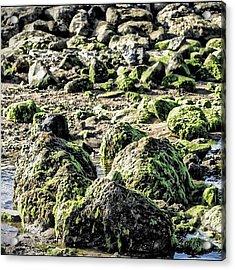 Algae Rocks Acrylic Print by Arya Swadharma