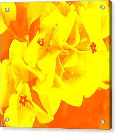 Ali Orange Acrylic Print by Keren Shiker