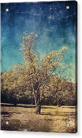 All That's Unknown Acrylic Print by Laurie Search