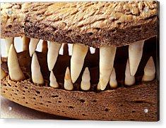 Alligator Skull Teeth Acrylic Print by Garry Gay